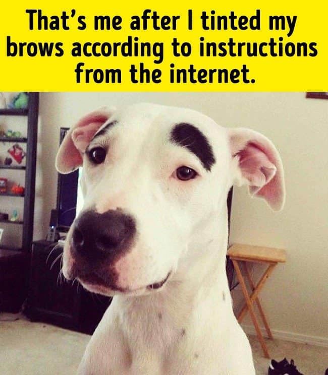tinted_brows_after_makeup_tutorial_funny_animal_photos