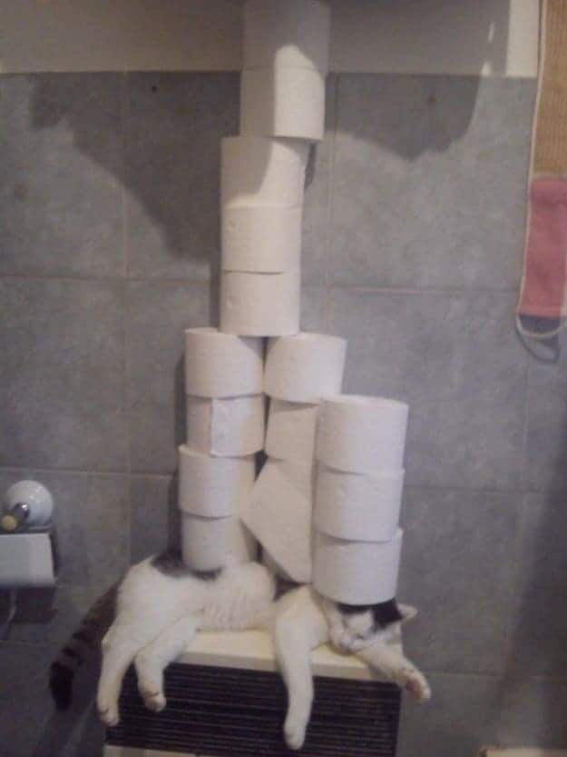 toilet-paper-on-a-shelf