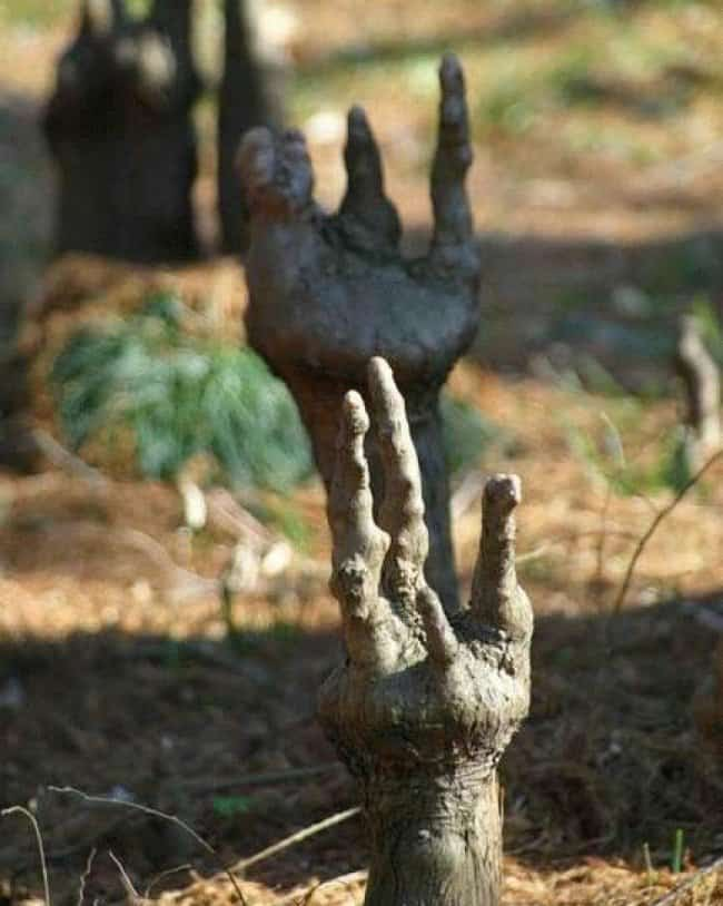 trees-resembling-creepy-hands-confusing-pictures