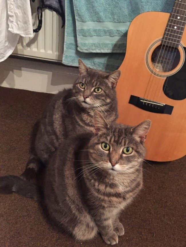 twin-cats