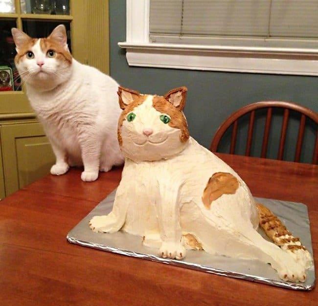 cat-cake-fail