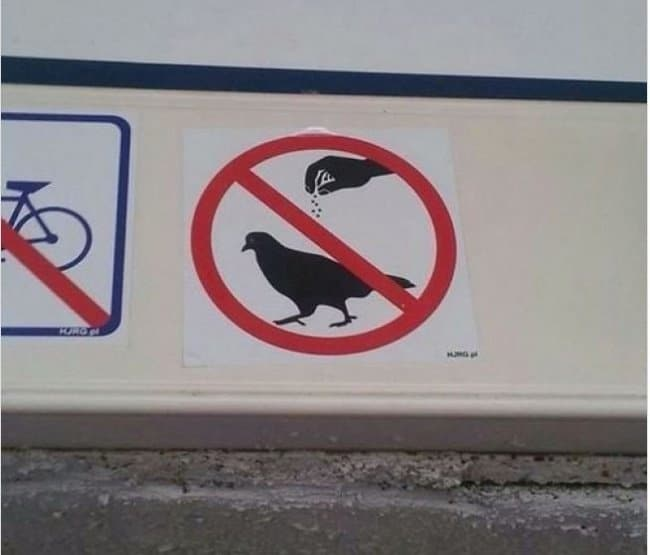 no-salt-on-pigeons