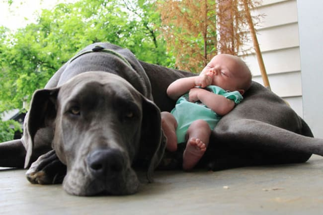 adorable photos of dogs and babies