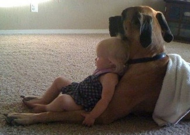 baby-girl-leaning-on-a-dog-adorable-photos