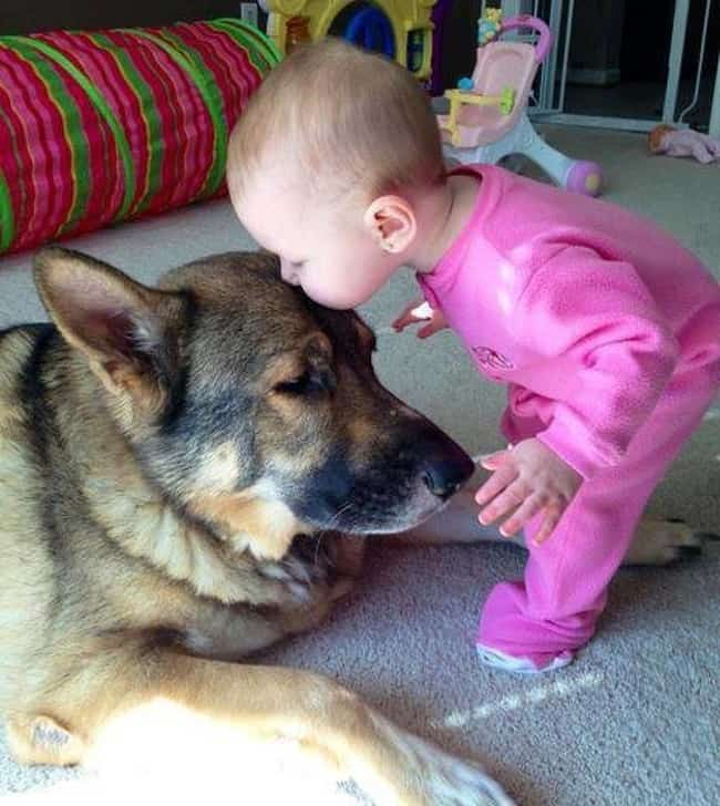 Adorable Photos Showing The Friendship Between Babies And Dogs