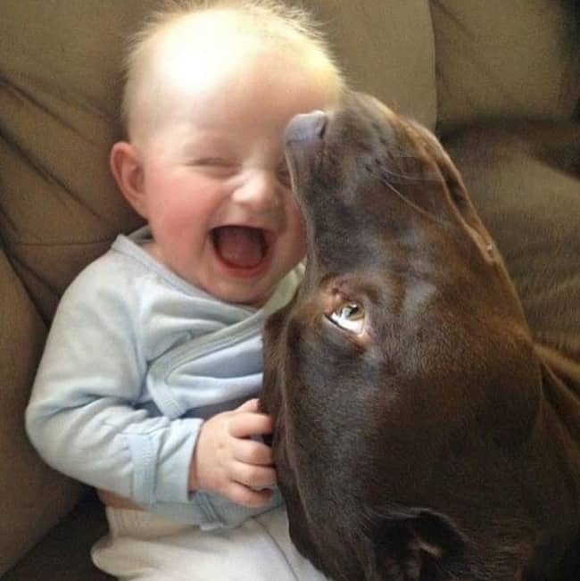 baby-laughing-at-the-dog-adorable-photos