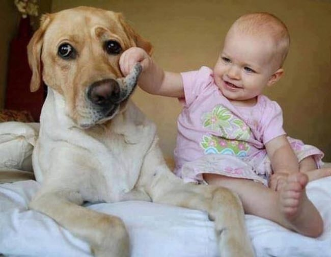 baby-playing-with-dog-face-adorable-photos