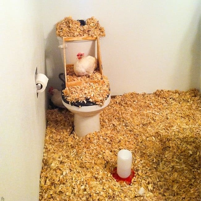 bathroom-turned-into-a-chicken-coop-roommate-pranks