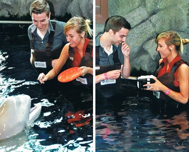 beluga-whale-brought-a-box-with-a-ring-creative-marriage-proposals