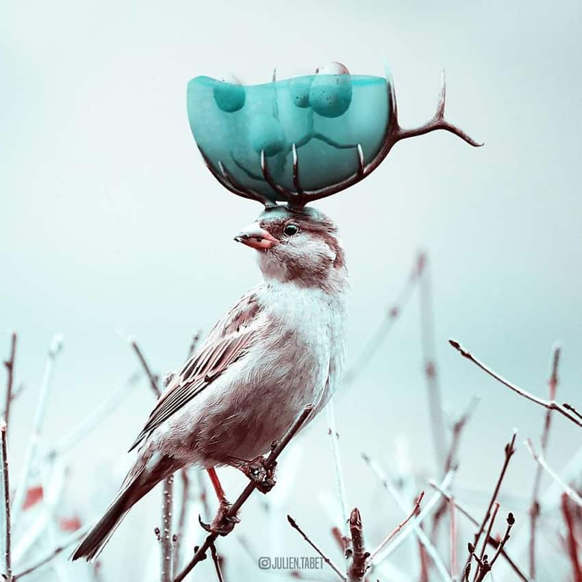 bird-with-antlers-bowl-of-water-marvelous-animal-photos