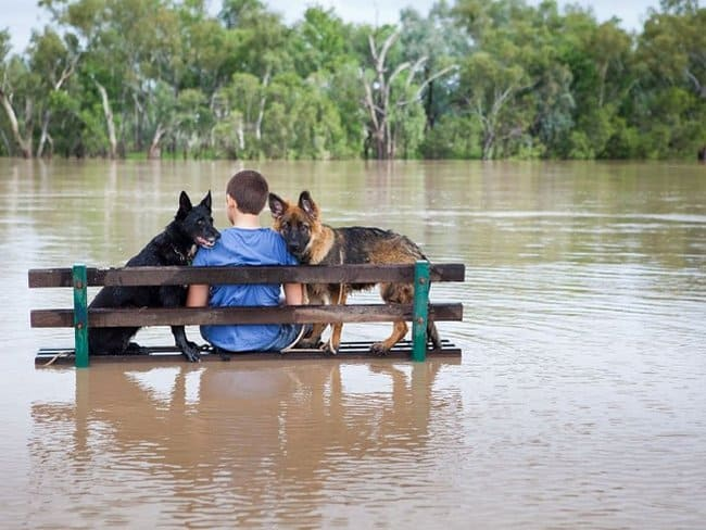 boy-with-2-dogs--in-the-middle-of-flood-heartwarming-photos