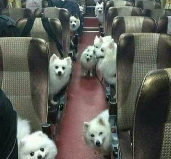 bus-full-of-cute-dogs-unfortunate-people