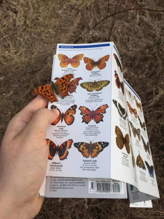 butterfly-lands-on-a-butterfly-catalog-extraordinary-things