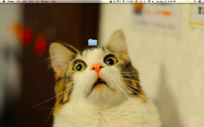 cat-amazed-by-a-single-folder-clever-desktop-wallpapers
