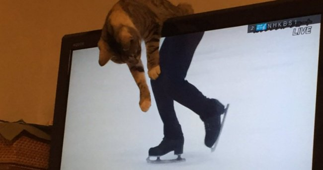 cat-ice-skating-monitor-perfectly-timed-photos