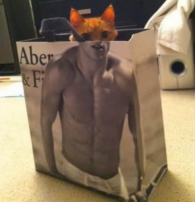 cat-in-a-paperbag-perfectly-timed-photos