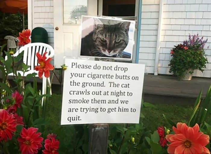 cat-smokes-your-cigarette-butts-hilarious-neighbor-notes