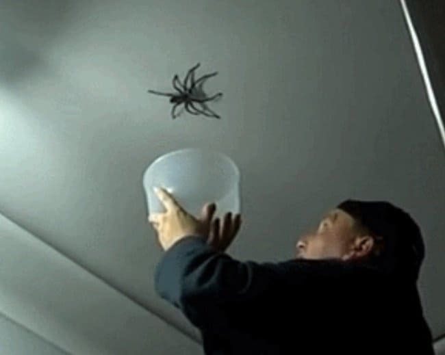 catching-a-giant-spider-terrible-unlucky-day