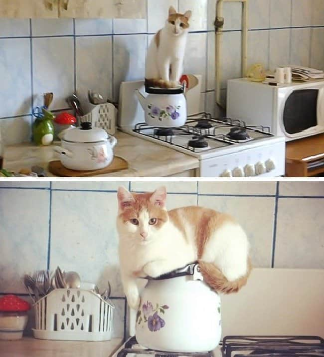 cats-sitting-on-top-of-kettles