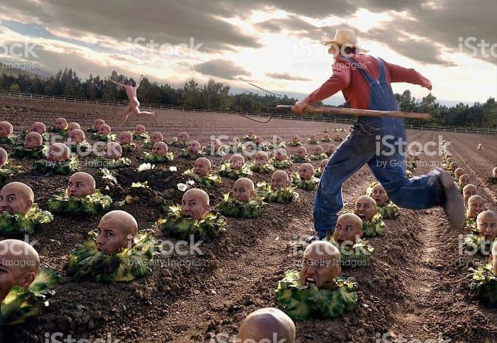 chasing-naked-guy-in-a-cabbage-head-field-weird-stock-photos