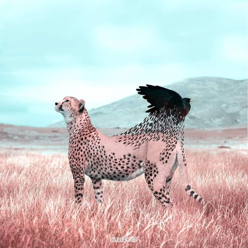 cheetah-spots-flying-away-marvelous-animal-photos