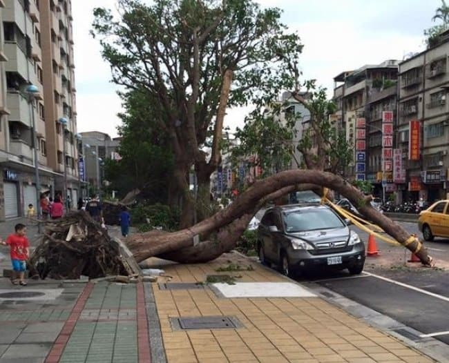 curved-tree-fallen-avoiding-a-car-extraordinary-things