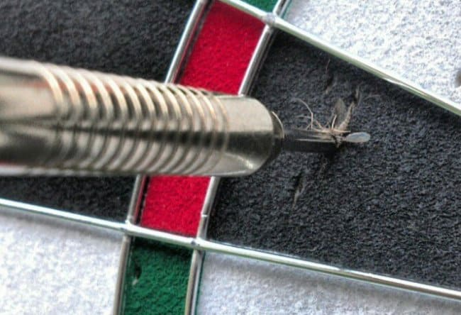 dart-shot-kills-a-mosquito-extraordinary-things