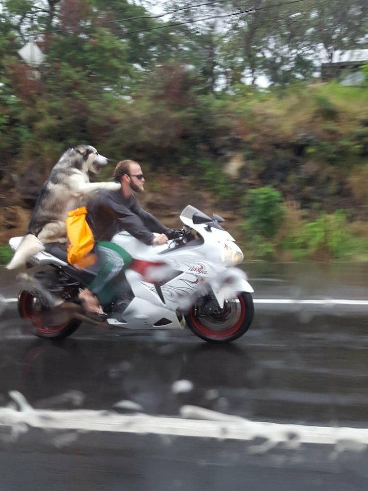 dog back ride motorcycle unbelievable real photos