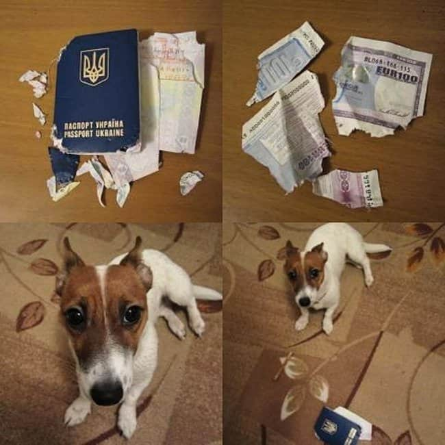 dog-chewed-out-passport-hilarious-excuses-for-being-late