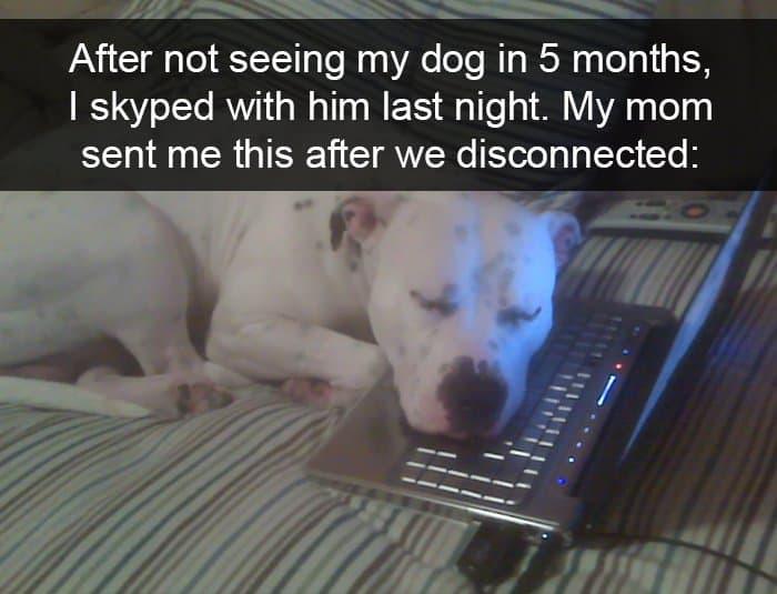 dog-falling-asleep-after-skype-adorable-dog-snapchats
