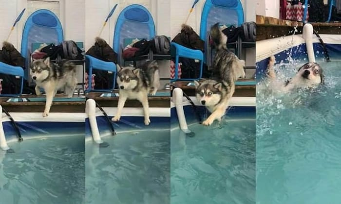 dog-falling-into-the-pool-cringeworthy-photos