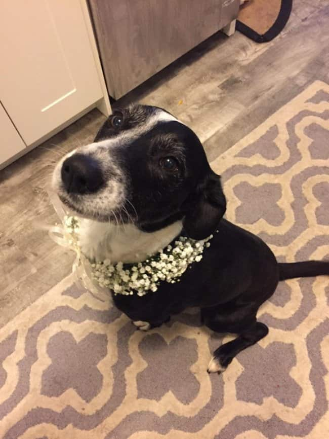 dog-wearing-flower-collar