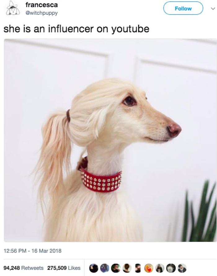 dog-youtube-star-hilarious-viral-tweets