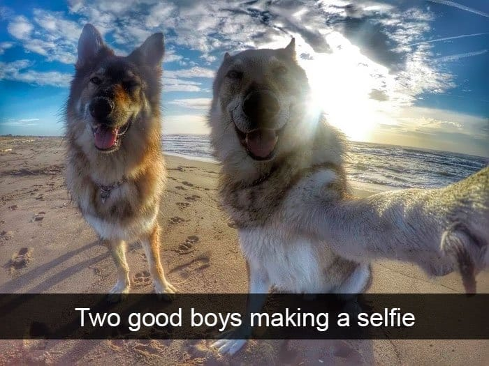dogs-making-selfie-adorable-dog-snapchats