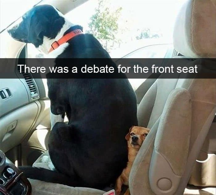 fighting-for-the-front-seat-adorable-dog-snapchats