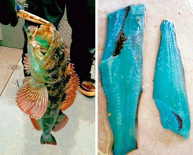 fish-with-blue-meat-rare-things-pictures