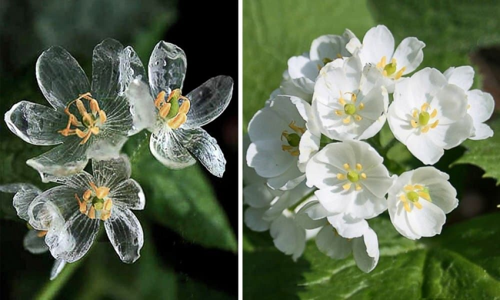 flower-petals-turn-transparent-when-it-rains-most-powerful-photos