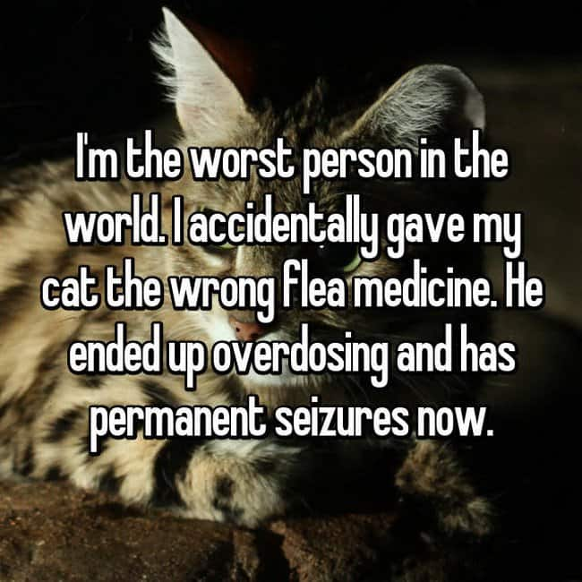 gave-my-cat-the-wrong-flea-medicine-and-has-permanent-seizures-now