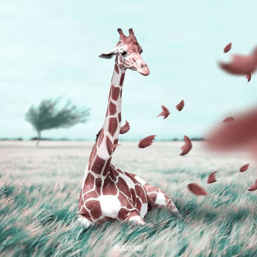 giraffe-spots-blown-away-marvelous-animal-photos