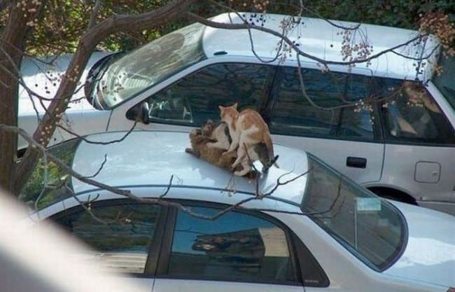 group-of-cats-doing-nasty-thing-on-top-of-car-hilarious-excuses-for-being-late