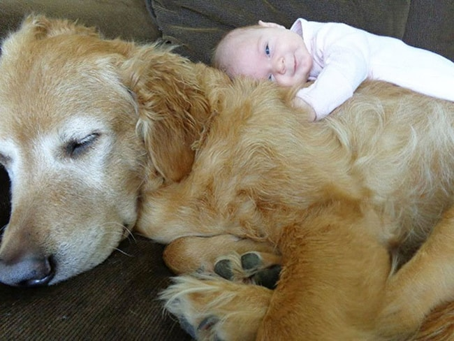 happy-baby-hugging-sleeping-dog-adorable-photos