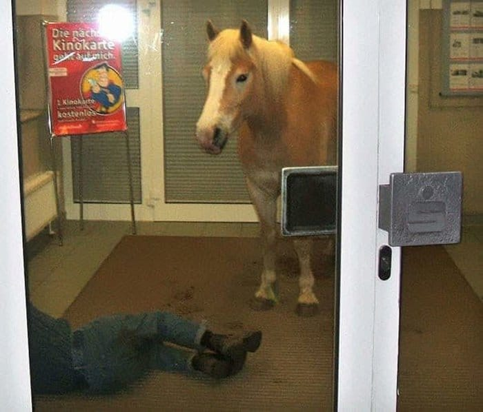 horse-looking-at-a-man-lying-on-the-floor-confusing-photos