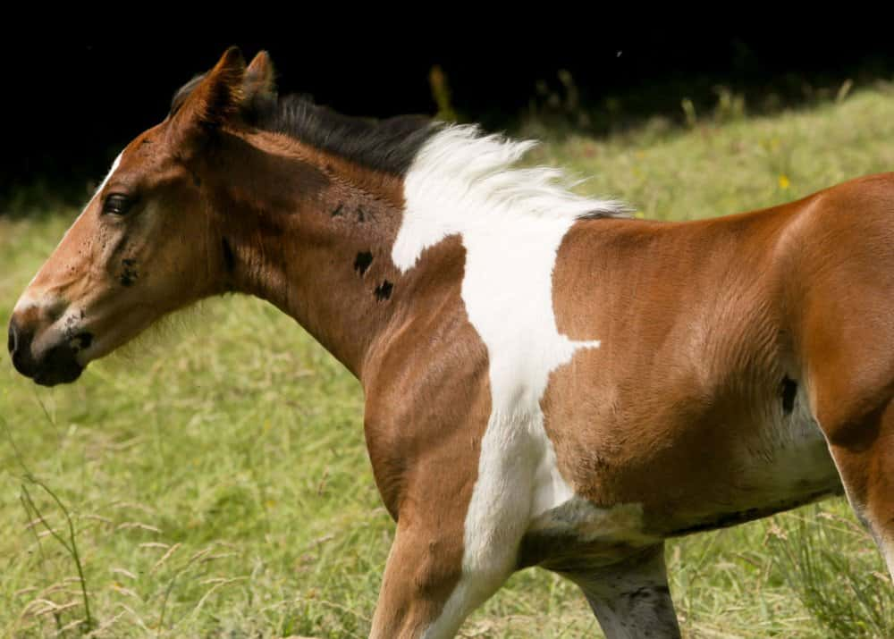 horse-skin-print-like-a-foal-most-powerful-photos