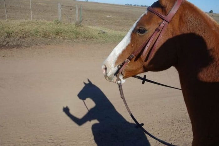 horse-taking-a-selfie-confusing-photos