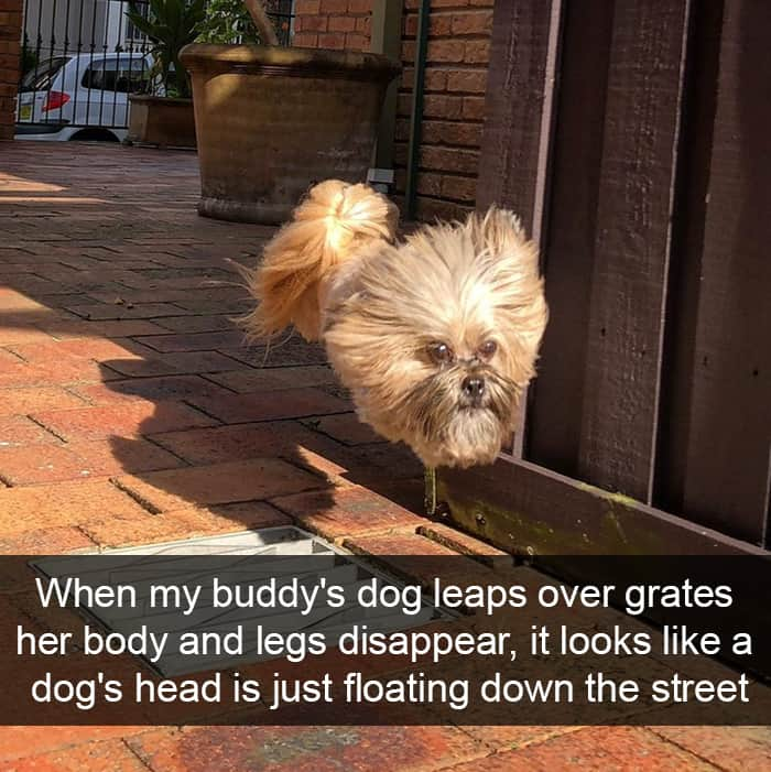 jumping-over-grates-adorable-dog-snapchats