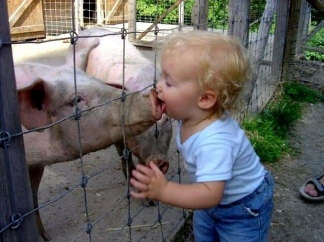 licking-a-pig-nose-funniest-things-kids-do