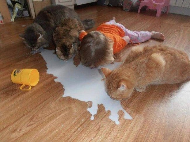 licking-milk-with-the-cats-funniest-things-kids-do