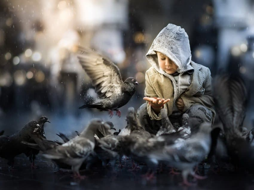 little-boy-and-the-pigeons