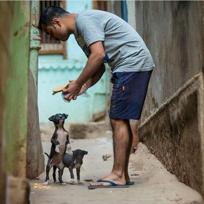 man-gives-foods-to-puppies-heartwarming-photos