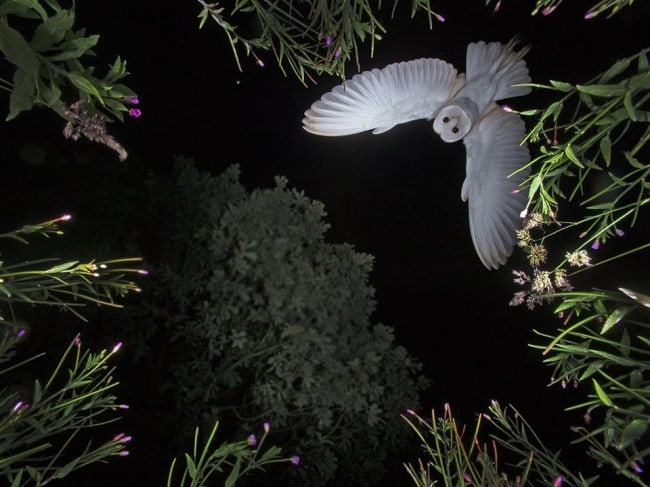 owl-captured-on-camera-at-night-exciting-photos-taken-by-accident